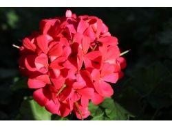 Посмотреть фото цветов 4