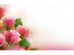 Посмотреть фото цветов 6