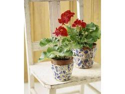 Цветок в вазе картинки