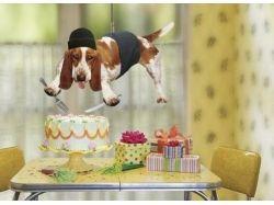Картинки с днем рождения прикольные смешные