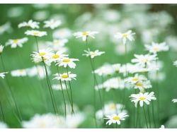 Цветы летом фото