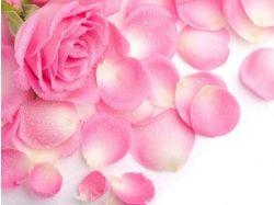 Красивые картинки цветов бесплатные