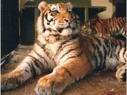Прикольные картинки животных бесплатные