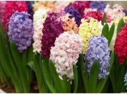 Хорошие фото цветы