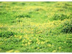 Поляна цветов картинки