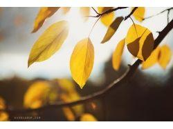 Осенняя природа фото