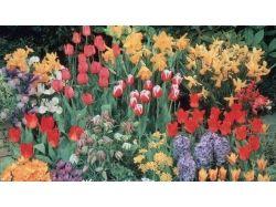 Каталог цветов в картинках