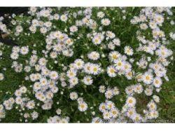Как сделать фото с цветами 2