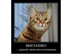 Животные фото смотреть онлайн бесплатно
