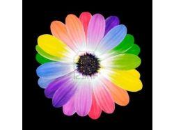 Картинки цветы в контакте