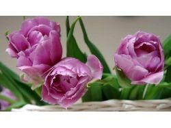 Махровые цветы фото