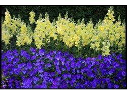 Как нарисовать цветы фото