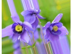 Самый красивый цветок картинки