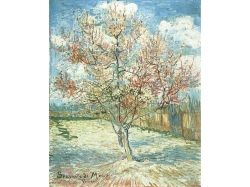 Деревья в цвету картинки