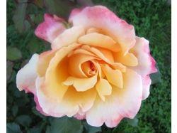 Лучшие картинки цветов