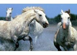 Красная книга животные фото с названиями животных
