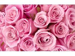 Картинки розовые розы цветы