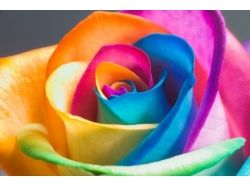 Смотреть картинки цветов