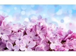 Супер картинки цветы