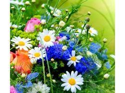 Картинки травы и цветов