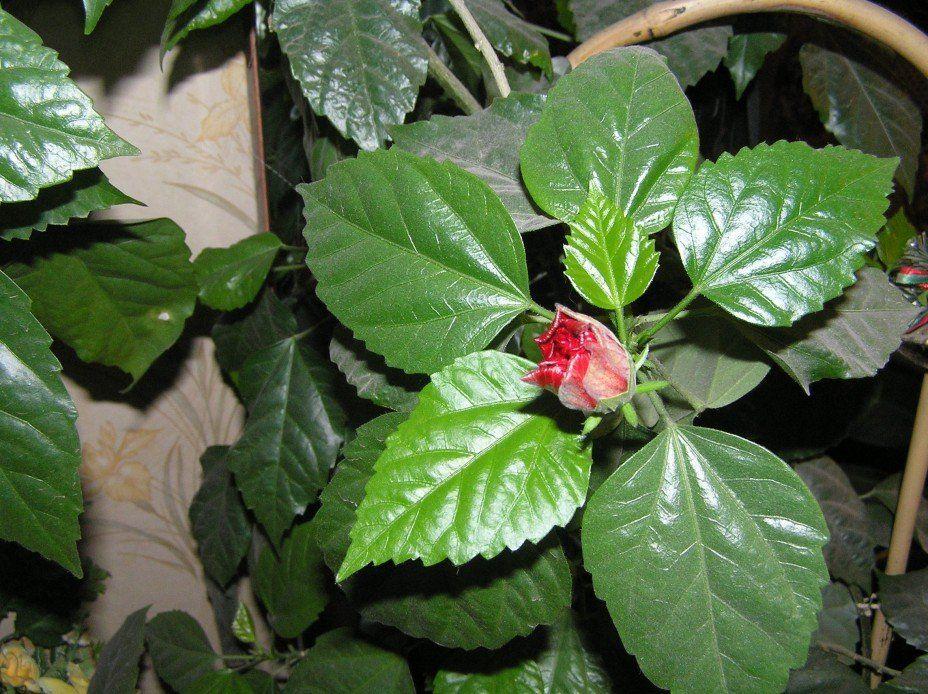 Комнатные растения цветущие картинки и названия