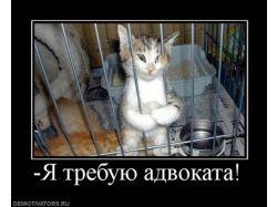 Демотиваторы с котами