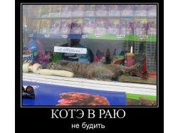 Веселые демотиваторы про котов