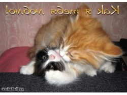 Картинки котята прикольные