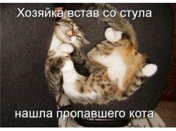 Прикольные картинки с котами прикольные картинки