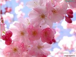 Красивые цветы на рабочий стол