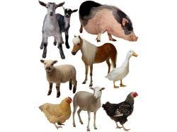 Картинки домашних животных