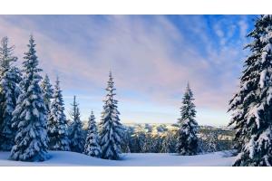 Картинки природа зима скачать бесплатно