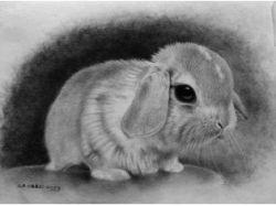 Скачать картинки про животных