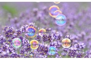 Заставка на компьютер мыльные пузыри