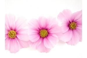 Разные картинки цветы