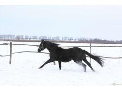 Фото лошадь зимой
