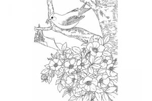 Картинки белого крота с детенышами для детей