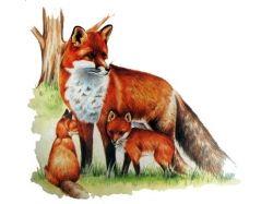 Картинки диких животных для детей