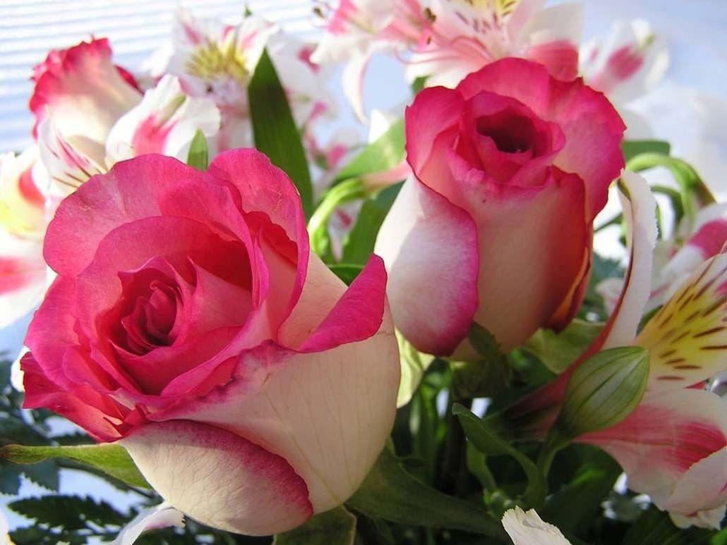 красивые открытки самая красивая роза общения