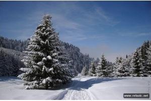 Красивые картинки природы пейзажи зимы