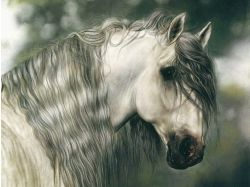 Картинки лошади красивые