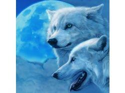 Красивые картинки волки