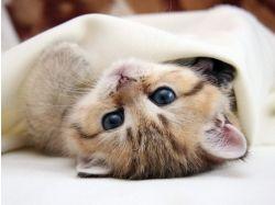 Кошки картинки красивые