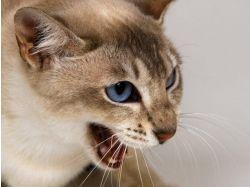 Кошки красивые картинки