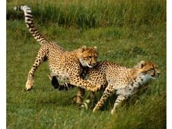 Картинки африканских животных