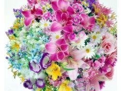 Картинки красивых цветов