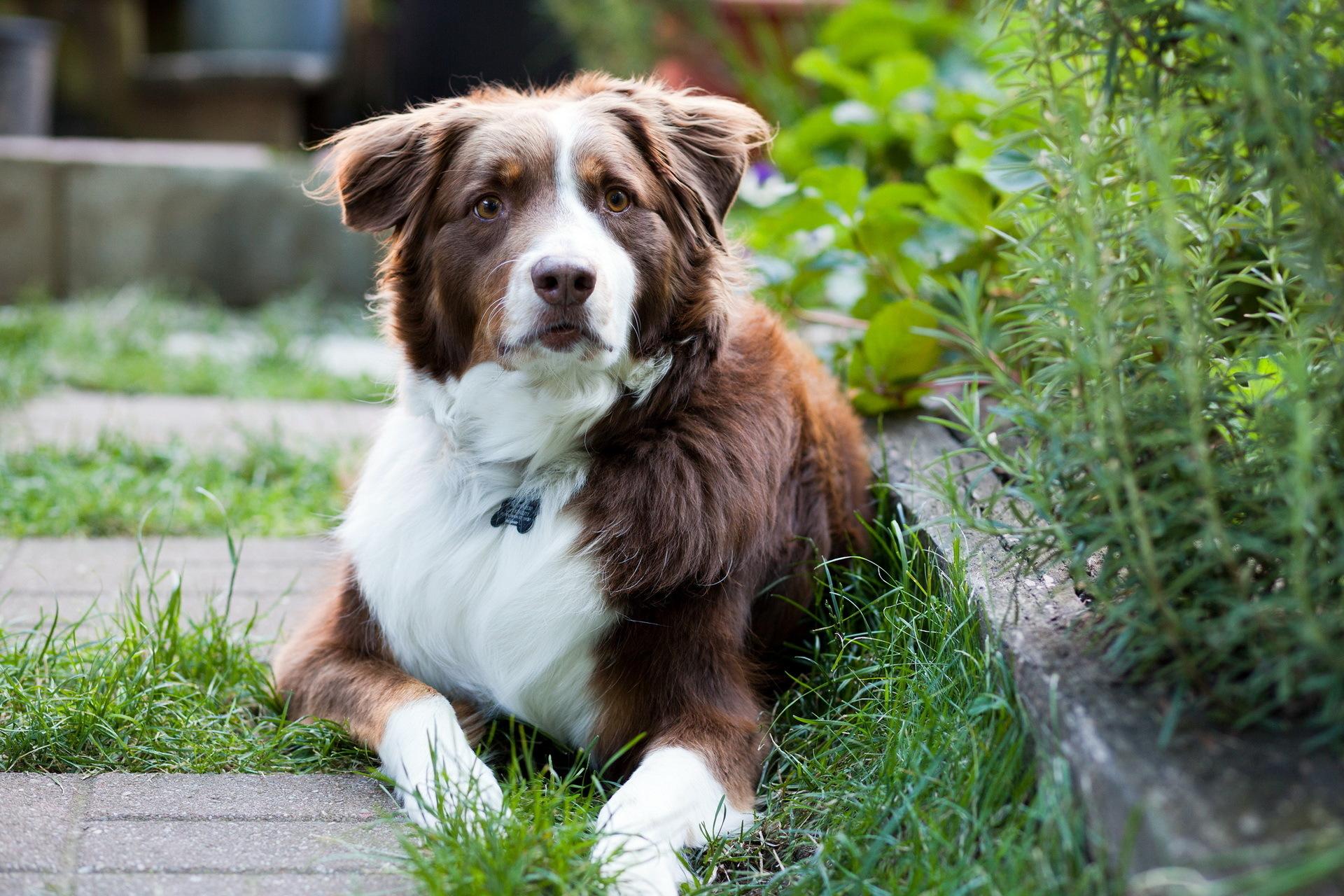 самые красивые картинки всех собак инструкция картинками, которые
