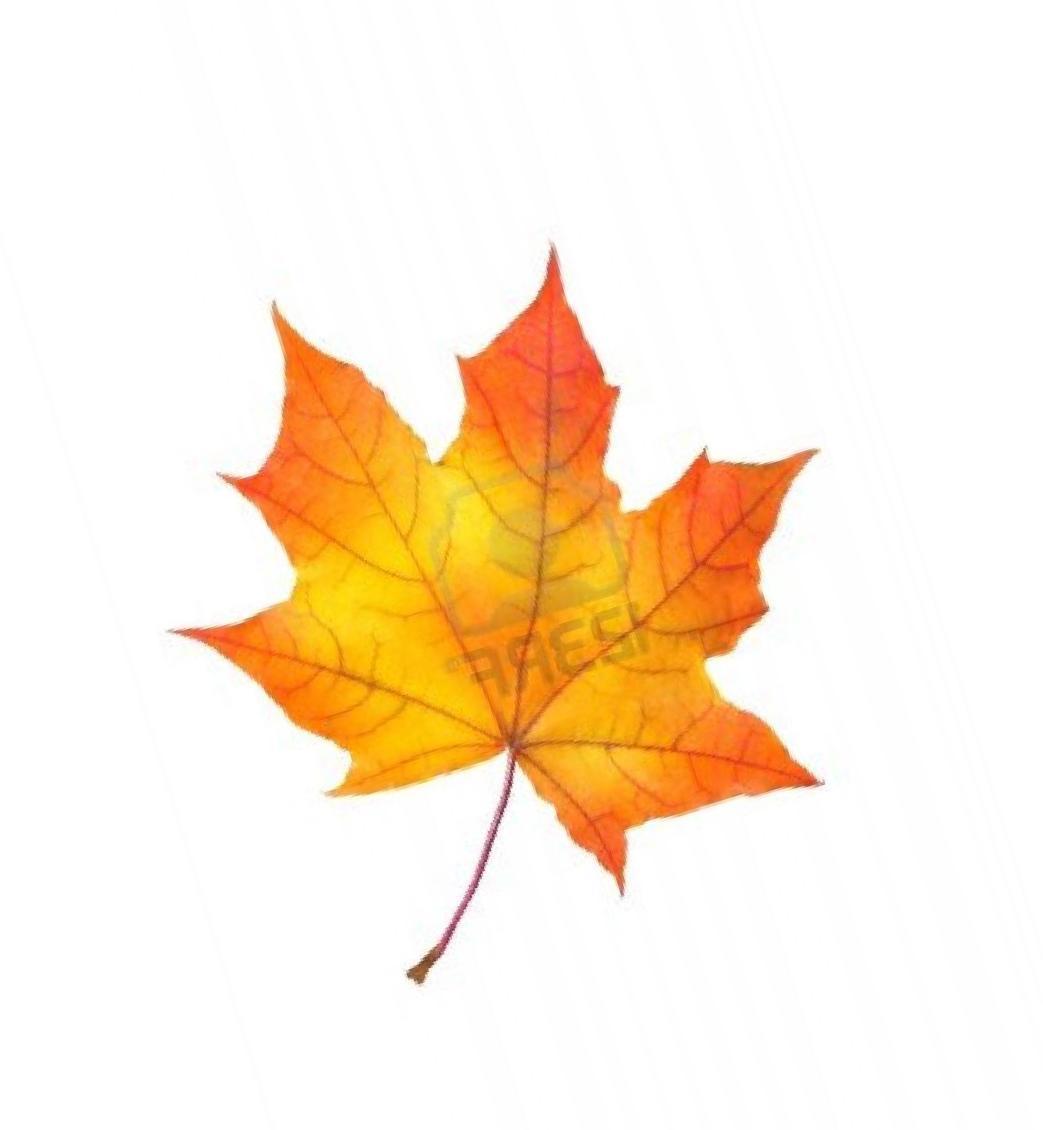 картинки кленовые листочки осенние на прозрачном фоне