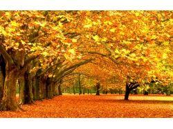 Золотая осень картинки