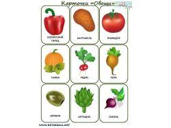 Овощи для детей картинки